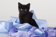Nettes schwarzes Kätzchen, das im Stapel des Farbbands spielt lizenzfreies stockbild