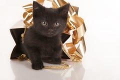 Nettes schwarzes Kätzchen im Goldgeschenkbeutel Stockfotos