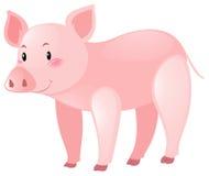 Nettes Schwein auf weißem Hintergrund Lizenzfreie Stockfotos