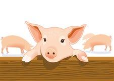 Nettes Schwein in einem Schweinestall Stockfotografie