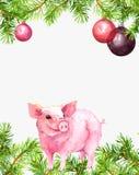 Nettes Schwein, Tannenzweige, dekorativer Flitter Weihnachten für Rahmen des neuen Jahres, Karte, leerer freier Raum watercolor vektor abbildung