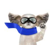 Nettes shitzu Hundefliegen mit seinen Ohren mag einen Superhelden Lokalisiert auf Weiß Stockfotos