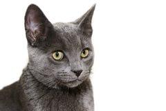 Nettes silbernes Kätzchen auf weißem Hintergrund Stockfoto