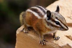 Nettes Streifenhörnchen, das auf Steingeländer sitzt stockfoto