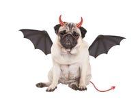 Nettes teuflisches Pughündchen kleidete oben für Halloween an, lokalisiert auf weißem Hintergrund stockbild