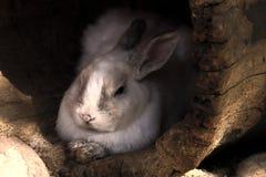 Nettes und flaumiges Wildkaninchen Silit im Haus in Form eines alten Baumstammes, flaumig im Schutz lizenzfreie stockfotos