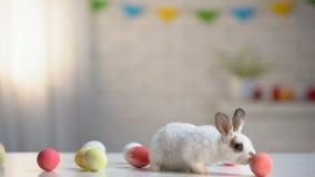 Nettes weißes Häschen, das mit Ostereiern Tabelle, Feiertagshintergrund, Einladung spielt stock video footage