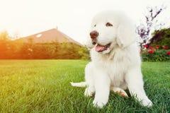 Nettes weißes Hündchen, das auf Gras sitzt Stockbild