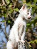 Nettes weißes Kätzchen in der Erforschung Lizenzfreie Stockbilder