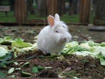 Nettes weißes Kaninchen Lizenzfreie Stockbilder