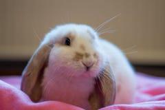 Nettes weißes Kaninchen Lizenzfreie Stockfotos