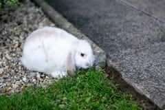 Nettes weißes Kaninchen Stockfotografie