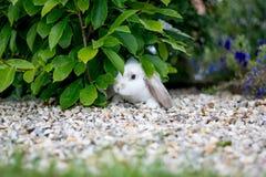 Nettes weißes Kaninchen Lizenzfreies Stockfoto
