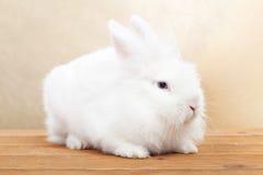 Nettes weißes Kaninchen auf Holzoberfläche Lizenzfreie Stockbilder