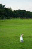 Nettes weißes Kaninchen, das auf Feld steht Lizenzfreie Stockbilder