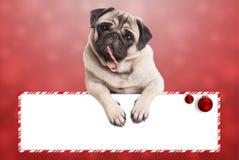 Nettes Weihnachtenpughündchen, das mit den Tatzen auf leerem Zeichen, auf rotem Hintergrund sich lehnt Stockfotografie
