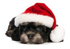 Nettes Weihnachtshavanese Welpenhund Lizenzfreies Stockfoto