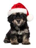 Nettes Weihnachtshavanese Welpenhund Lizenzfreie Stockfotografie