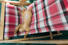 Nettes wenig Babykatzen-/-Miezekatze-/-kätzchenspiel auf Klappbetten Stockfoto