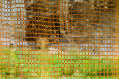 Netting background Royalty Free Stock Images