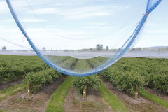 Netting for Blueberry Crops Royalty Free Stock Photo