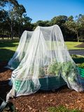 Netting insect for organic vegetable garden. Netting insect protection against insects including Japanese beetles, stink bugs and grasshoppers, as well as birds stock images
