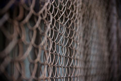 Netting Stock Images