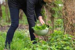 Nettle επιλογής γυναικών στον κήπο στοκ εικόνες