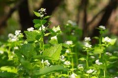 nettle λουλουδιών στοκ εικόνα με δικαίωμα ελεύθερης χρήσης