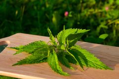 Nettle on a board Stock Photos