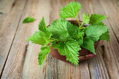 Nettle in bowl. For cooking Royalty Free Stock Image