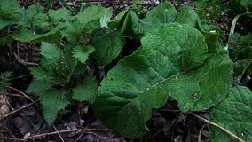 Nettle and burdock royalty free stock images