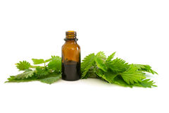 Nettle essence in a bottle and fresh branches with leaves isolat Stock Photo