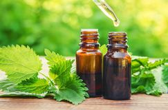Nettle essence oil. Nettle essence oil and fresh branches blooming nettle stock photo