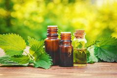 Nettle essence oil. Nettle essence oil and fresh branches blooming nettle stock image