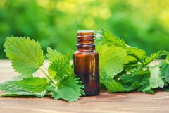 Nettle essence oil. Nettle essence oil and fresh branches blooming nettle royalty free stock photo