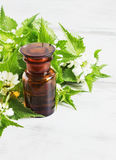 Nettle essence oil royalty free stock images