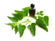 Nettle extract royalty free stock photography