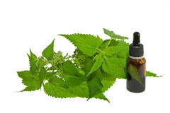Nettle extract royalty free stock photo