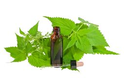 Nettle extract Stock Photos