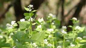 Nettle flowers spring scene Stock Images