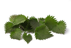 Nettle Stock Images