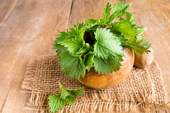 Nettle. Fresh raw nettle leaves over rustic wooden table stock images