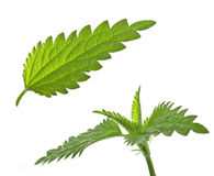 Nettle leaves Royalty Free Stock Photos