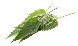 Nettle leaves isolated Royalty Free Stock Photography