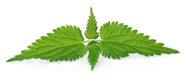 Nettle leaves. Isolated over white background royalty free stock images