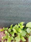 Nettle near plastic green sunprotector fence stock photography