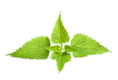 Nettle Stock Photography