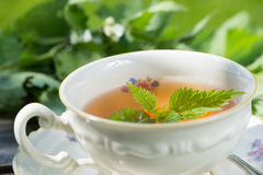 Nettle tea royalty free stock photography
