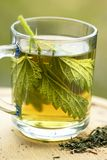 Nettle tea Royalty Free Stock Image
